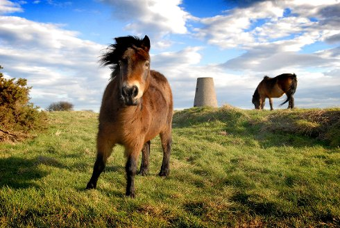 Ponies Return to Cleadon Hills for the Winter